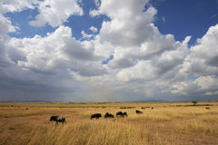 Savannah landscape in the National park of Kenya Stock Photos