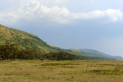 Savannah landscape in the National park of Kenya Royalty Free Stock Photo