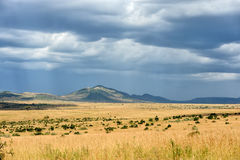 Savannah landscape in the National park of Kenya Stock Image