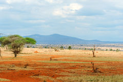 Savannah landscape in the National park of Kenya Stock Photography