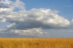 Savannah landscape in the National park of Kenya Stock Images