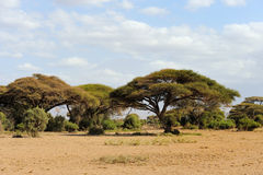 Savannah landscape in the National park of Kenya Royalty Free Stock Photo
