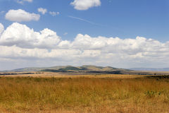 Savannah landscape in the National park in Kenya Stock Photography