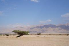 Savannah landscape. Near Eilat, south Israel Royalty Free Stock Photo
