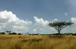 Savannah landscape. Rugged landscape in KZN thornveld Stock Photos
