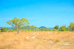 Savannah Landscape. In Southern of Thailand near Phuket stock photo
