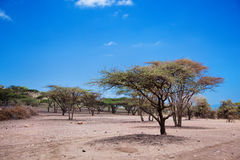 Savannah landscape in Tanzania, Africa Stock Images