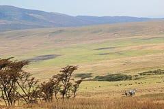 Savannah nära den Ngorongoro krater, Tanzania Royaltyfri Bild