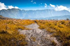 Savannah near Mount Bromo Royalty Free Stock Images