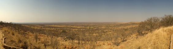 Savannah panorama. Panorama of the savannah in the kruger national park in southafrica Stock Images