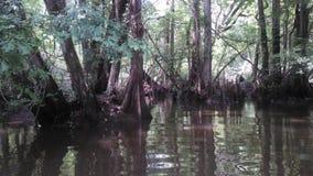 Savannah River Durchlauf-Flusssumpf lizenzfreies stockbild