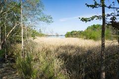 Savannah River Marsh. Located South Carolina, USA royalty free stock photos