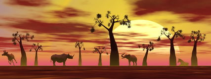 Savannah scenery by sunset. Shadows of animals in the savannah next to baobabs by sunset Royalty Free Stock Photography