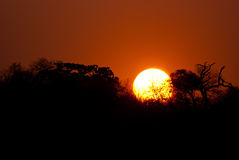 Savannah sunset Royalty Free Stock Images