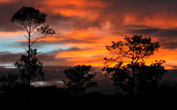 Savannah Sunset Stock Image