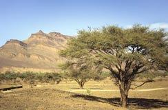 savannah uprawiająca Zdjęcia Stock