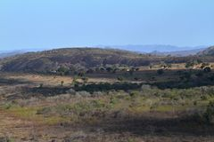 The Savannah in Zimbabwe. The Savannah and forest in Zimbabwe royalty free stock images