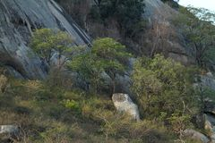 The Savannah in Zimbabwe. The Savannah and forest in Zimbabwe royalty free stock photography