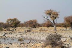 Savannahen i den Etosha nationalparken i Namibia Royaltyfri Bild