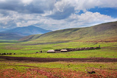 Savannahen landskap i Tanzania, Afrika Royaltyfria Foton