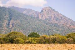 Savanne, Baum und Berg stockbilder