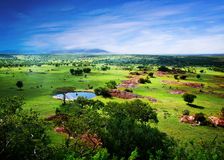 Savanne in der Blüte, in Tanzania, Afrika-Panorama Stockbild