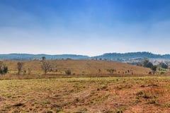 Savanne forset Landschaft in Thailand Stockbilder