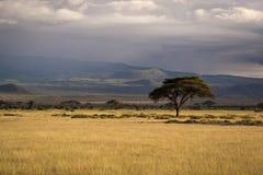 Savanne in Kenia lizenzfreie stockbilder