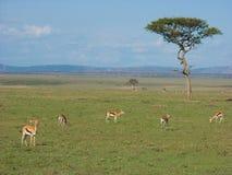 Savanne met gazelles royalty-vrije stock foto