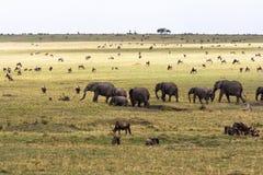 Savanne met grote en kleine herbivores Olifanten en het meest wildebeest in de savanne Masai Mara, Kenia Stock Foto's