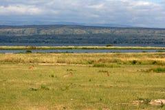 Savanne - Murchison Dalingen NP, Oeganda, Afrika royalty-vrije stock foto