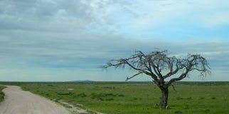 Savanne in Namibië, Afrika stock foto