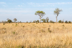Savanne, Nationalpark Kruger Berühmter Kanonkop Weinberg nahe malerischen Bergen am Frühling Stockbild
