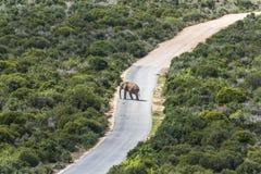 Savanne von Addo Elephant Park, Südafrika Lizenzfreie Stockbilder