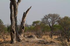 Savanne in Zuid-Afrika royalty-vrije stock afbeeldingen