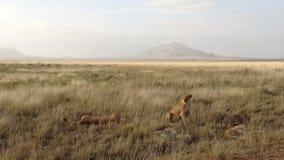 Savannegebied in zomer stock foto's