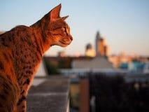 Savannekat en de Horizon van Frankfurt op Achtergrond royalty-vrije stock foto's