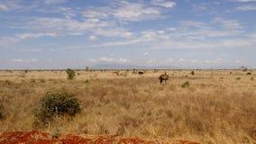 Savannen-Feld in der Sommersaison stockfotos