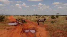 Savannen-Feld in der Sommersaison stockfotografie