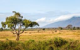 Savannenebenen gestalten in Kenia landschaftlich stockfotos
