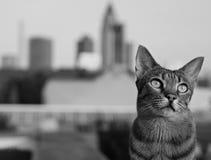 Savannenkatze in Frankfurt stockfotos