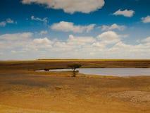 Savannenlandschaft mit einem Baum Stockfoto