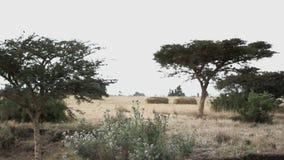 Savannlandskap i Afrika arkivfilmer