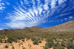 Savannskoglandskap och blå himmel i Cape Town arkivfoto