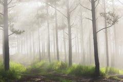 Save ściąganie zapowiedź Ray, drzewa, mgły i światła słonecznego, zdjęcia stock