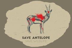 Save antelope. Save wildlife. Royalty Free Stock Photos