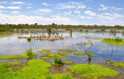 Save the Beelier Wetlands, Western Australia. Conservation of the Beelier wetland reserve and lake landscape with green mudflats, reeds and floating vegetation stock images