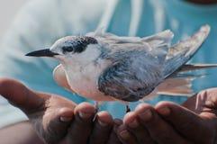 Save a bird, save the environment Stock Photography