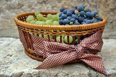 Save Download Preview Grapes in basket with bow. White and blue grapes in a straw basket with brown bow with white dots Royalty Free Stock Photos