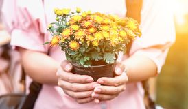 Save earth save life by plant the tree, environment concept. By holding flowers stock photography